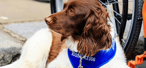 An assistance dog